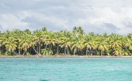 Caribbean sea with turquoise water and palms close to Saona island Stock Image