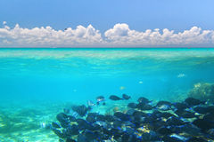 Caribbean Sea under blue sky. A shoal of blue fishes in Caribbean Sea under blue sky, Mexico Royalty Free Stock Photography