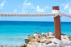Caribbean sea in vacations beach. Seagulls in peer of cancun caribbean beach Stock Photo