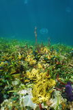 Caribbean seabed with colorful underwater life Stock Image