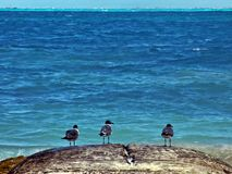 Caribbean Seascape with Three Birds Royalty Free Stock Photos