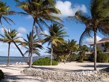 Caribbean Seaside Resort. Palm trees in front of a beautiful Caribbean seaside resort Stock Photography