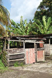 Caribbean shack. Stock Photos