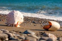 Caribbean Shells On The Beach Royalty Free Stock Image