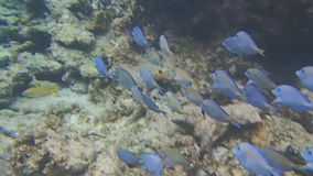 Caribbean snorkeling stock video footage