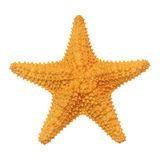 Caribbean starfish Stock Images