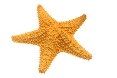 Caribbean starfish Royalty Free Stock Images
