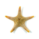 The caribbean starfish on a white background royalty free stock photo