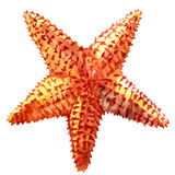 The caribbean starfish on a white background. Stock Images
