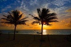 Caribbean sunrise palm trees Riviera Maya royalty free stock images