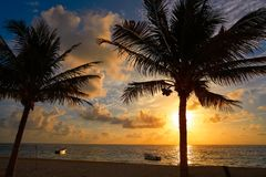 Caribbean sunrise palm trees Riviera Maya Stock Image