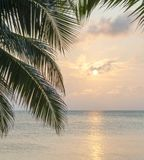 Caribbean Sunrise Palms Background. Tropical island background of palm trees at sunrise in the Caribbean Stock Photo