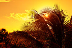 Caribbean Sunset in Mayan Riviera Stock Images