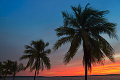 Caribbean sunset. With silhouette of palm trees Royalty Free Stock Photography