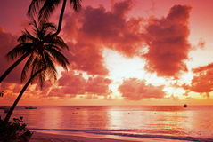 Caribbean sunset, Tobago. Palm trees along the shoreline at sunset, Pigeon Point Beach, Tobago, Trinidad and Tobago, Caribbean, West Indies Stock Photos