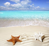 Caribbean tropical beach white sand starfish shell. Caribbean shell and starfish over wavy white sand beach such a summer vacation symbol Stock Photo