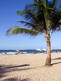 Caribbean Tropical Paradise. Shot of a tropical caribbean beach with a palm tree/coconut tree in the foreground with surf and sand Royalty Free Stock Photo