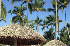 Caribbean tropical resort beach. Dominican resort. Palms with umbrellas on beach Royalty Free Stock Photos