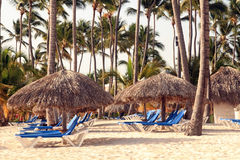 Caribbean tropical resort beach. Dominican resort with umbrellas and chairs on beach Royalty Free Stock Image
