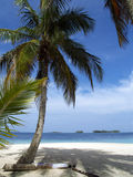 Caribbean tropical white sand beach. In panama Stock Photos
