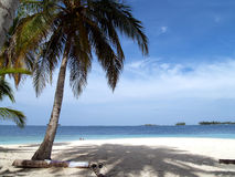 Caribbean tropical white sand beach. In panama royalty free stock photography