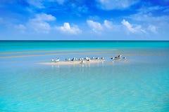 Caribbean turquoise perfect beach Riviera Maya. Caribbean turquoise perfect beach in Riviera Maya of Mexico royalty free stock image