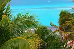 Caribbean turquoise sea coconut palm trees Stock Photography