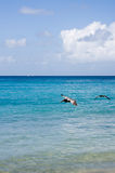 Caribbean Waters. Pelicans flying over shallow waters in a Caribbean beach. British Virgin islands Stock Images