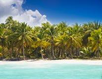 Caribbean wild beach Royalty Free Stock Photo