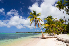 Caribbean wild beach Royalty Free Stock Images