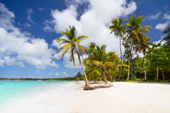 Caribbean wild beach with palm trees Stock Image