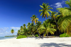 Caribbean wild beach Stock Photo
