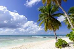 Caribbean wild beach. Punta Cana stock photos