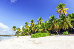 Caribbean wild beach Stock Images