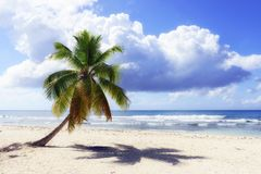 Caribbean wild beach Royalty Free Stock Image