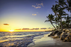 Caribbean wild beach, Punta Cana. Palm trees on the tropical beach, Bavaro, Punta Cana, Dominican Republic royalty free stock photography