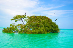 Caribbean wildlife  - paradise places Royalty Free Stock Image