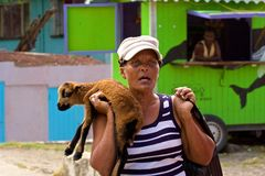 Caribbean woman and a small sheep, Caribbean. People of rural Bequia, Grenadines, Caribbean Stock Images