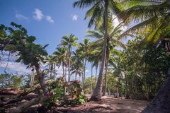 Caribe beach with palm trees time lapse. A caribe beach time lapse stock video