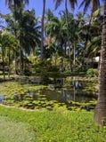 Caribean garden Stock Photo
