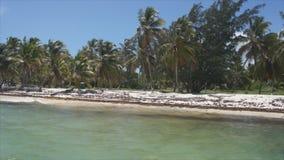 Caribian Meer der Strandpalme stock video footage