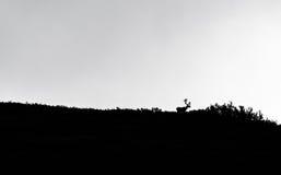 Caribou σκιαγραφία Στοκ φωτογραφία με δικαίωμα ελεύθερης χρήσης