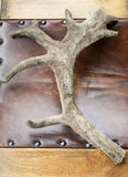 Caribou Antler Stock Photos