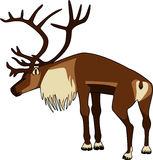 Caribou Bull Royalty Free Stock Photos
