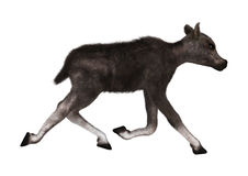 Caribou Calf. 3D digital render of a caribou calf isolated on white background Royalty Free Stock Images