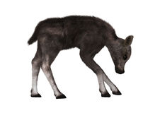 Caribou Calf. 3D digital render of a caribou calf  on white background Stock Photo
