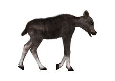 Caribou Calf. 3D digital render of a caribou calf  on white background Royalty Free Stock Images