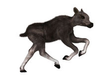 Caribou Calf. 3D digital render of a caribou calf  on white background Royalty Free Stock Image