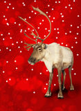 Caribou reindeer on red. Christmas bokeh background Royalty Free Stock Photography