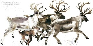Caribou. reindeer watercolor illustration. Wild Lapland animals Royalty Free Stock Photo